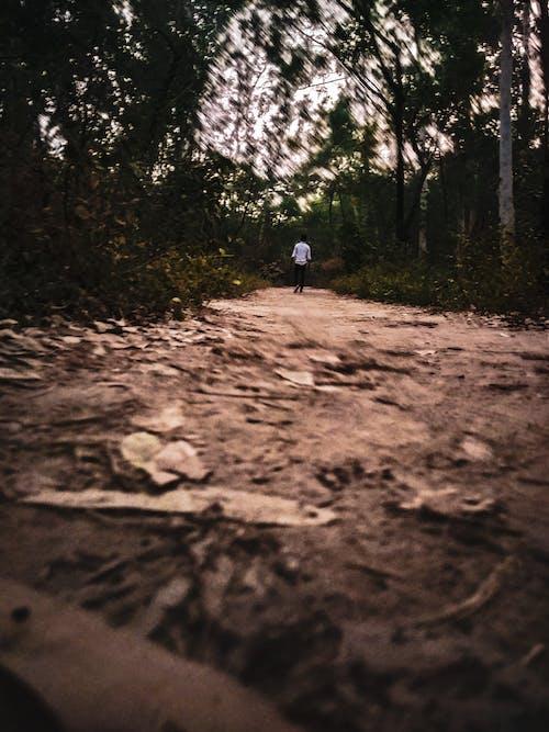 Darmowe zdjęcie z galerii z chłopak, dorosły, droga, las