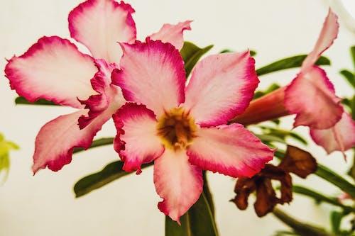 Darmowe zdjęcie z galerii z flora, flora kwiatowa, piękne kwiaty
