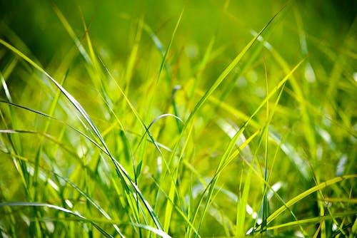 Foto d'estoc gratuïta de assolellat, brillant, clareja, creixement