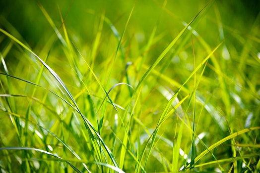 Green Grass Macro Photography