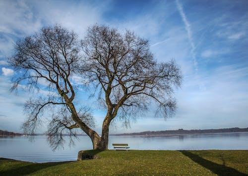 Fotos de stock gratuitas de agua, árbol, banco, cielo