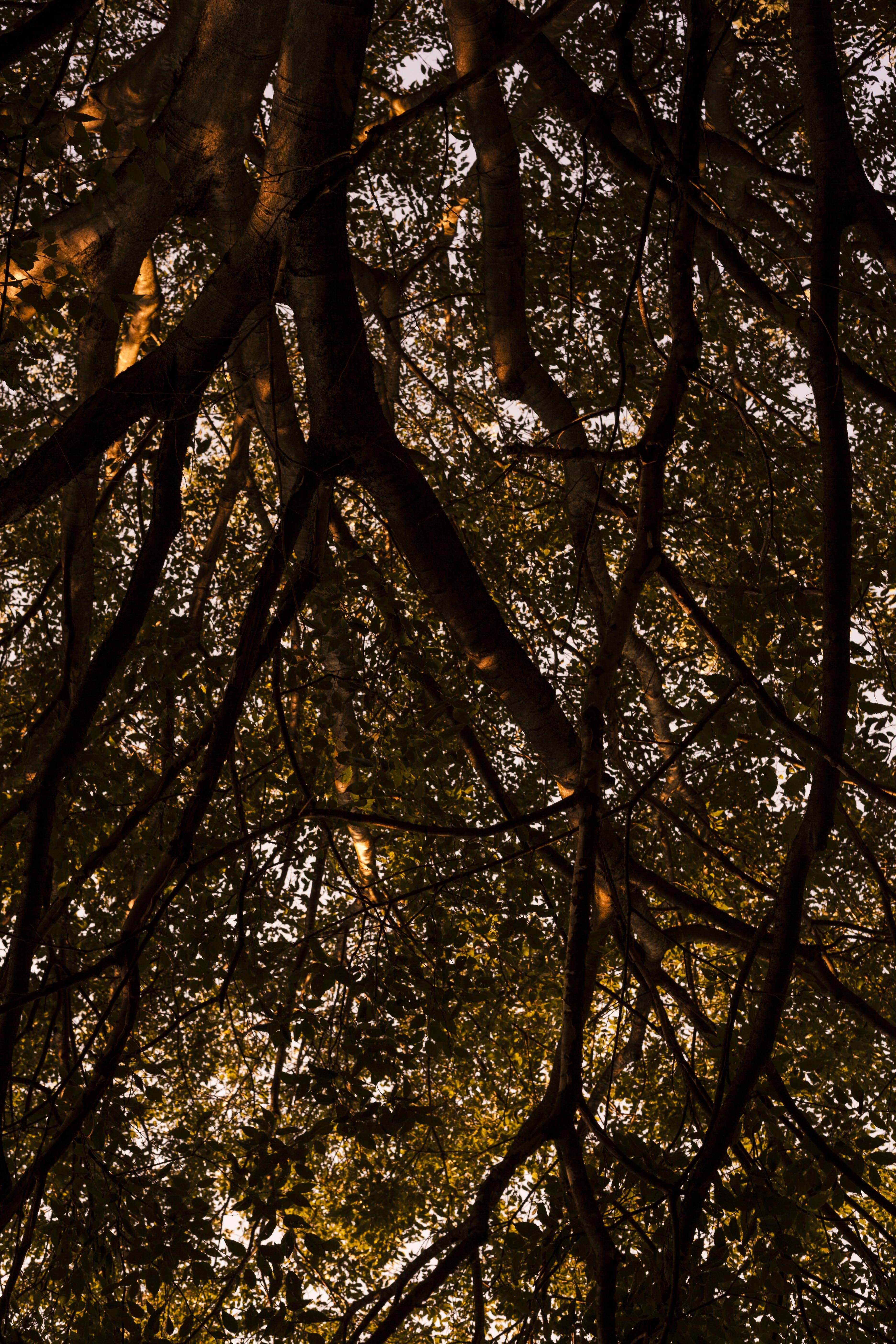 Gratis arkivbilde med grener, lav-vinklet fotografering, miljø, natur
