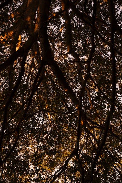 Foto stok gratis alam, cabang, di luar rumah, fotografi sudut rendah