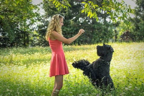 Photos gratuites de chien, chien heureux, chien noir, été