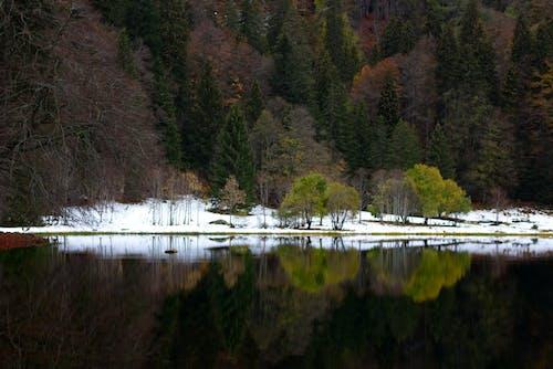 Kostenloses Stock Foto zu am meer, schnee, spiegel, spiegel fluss