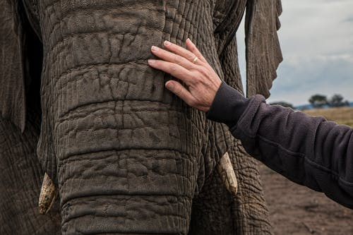 Fotobanka sbezplatnými fotkami na tému chobot slona, divočina, ruka, slon