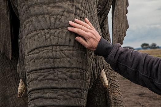 Man in Black Jacket Holding Elephant Under White Sky during Daytime