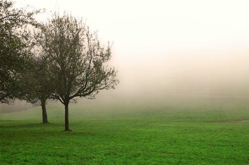 natureworld 的 免费素材照片