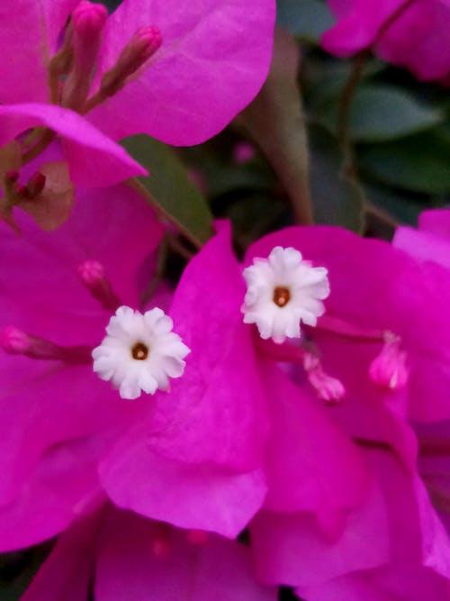 Бесплатное стоковое фото с близнецы гопалакриш, букет цветов