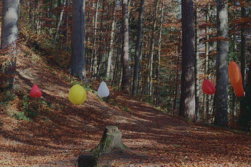 Kostenloses Stock Foto zu balloon, big trees, Forest, natural