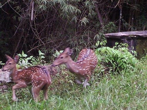 Бесплатное стоковое фото с дикая природа, фотографии животных