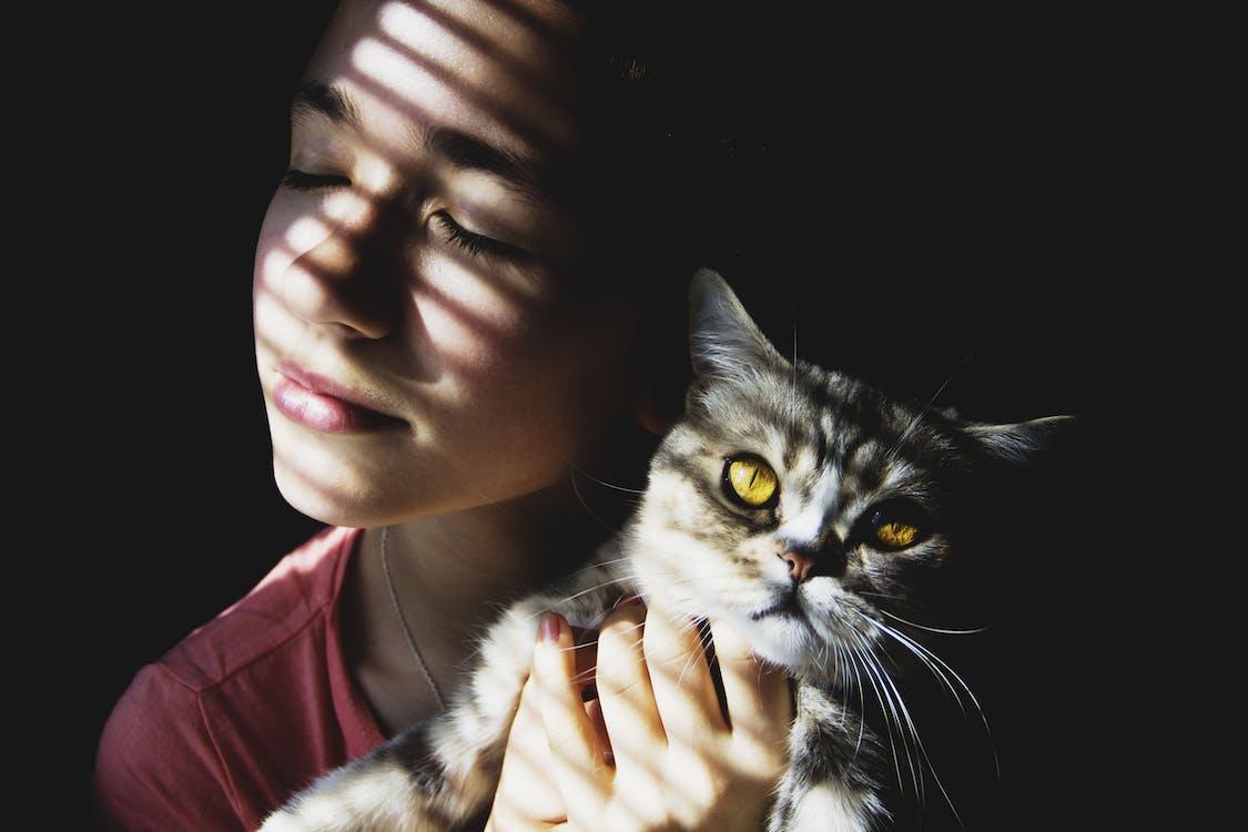 beauty, cat, dark background