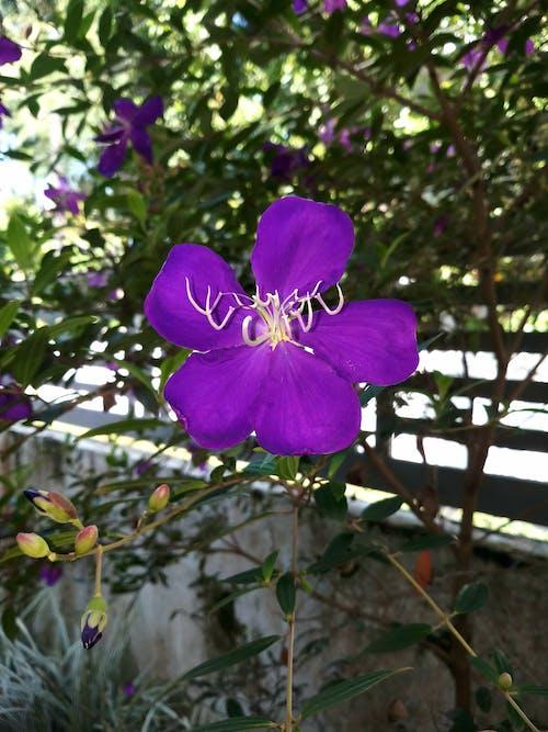 Бесплатное стоковое фото с цветы фотография