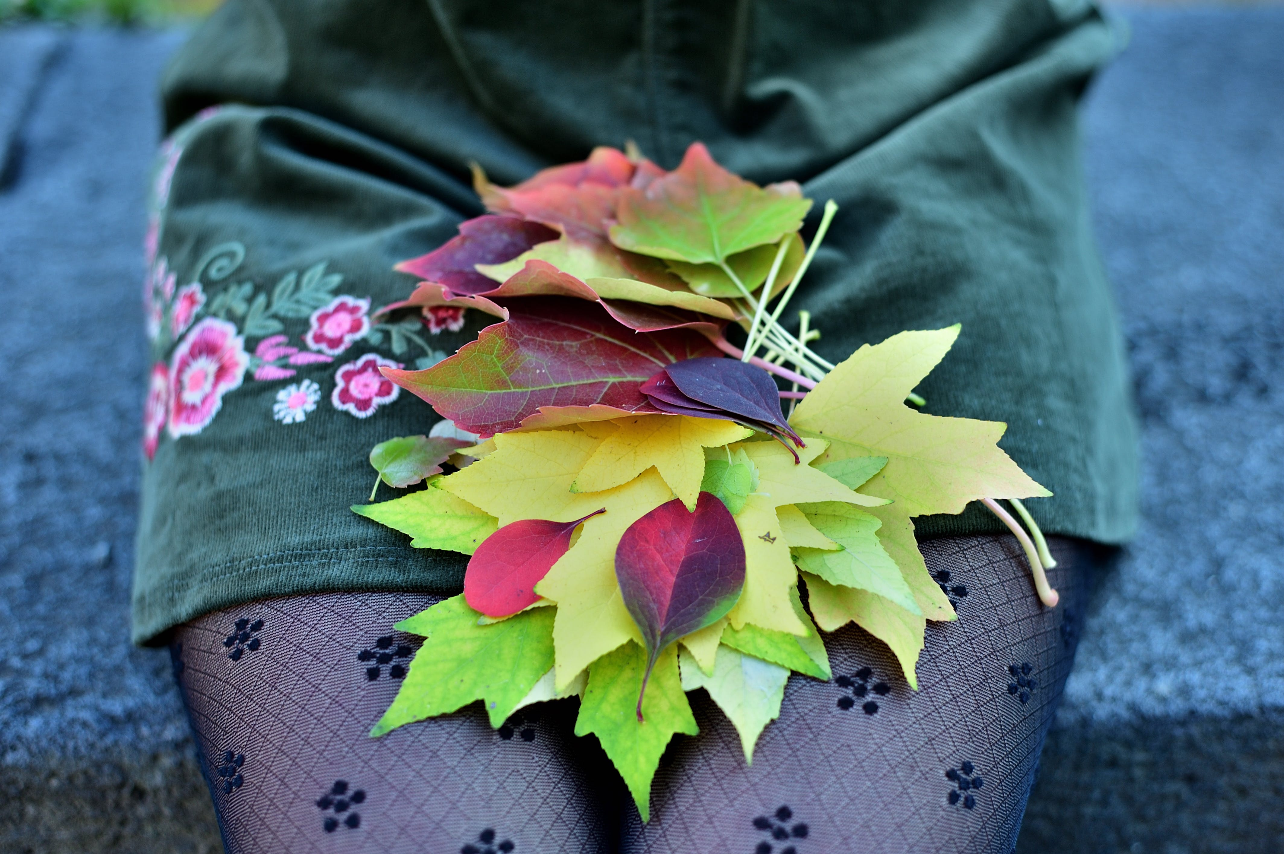 Free stock photo of autumn colors, autumn colours, autumn leaf, autumn leaves