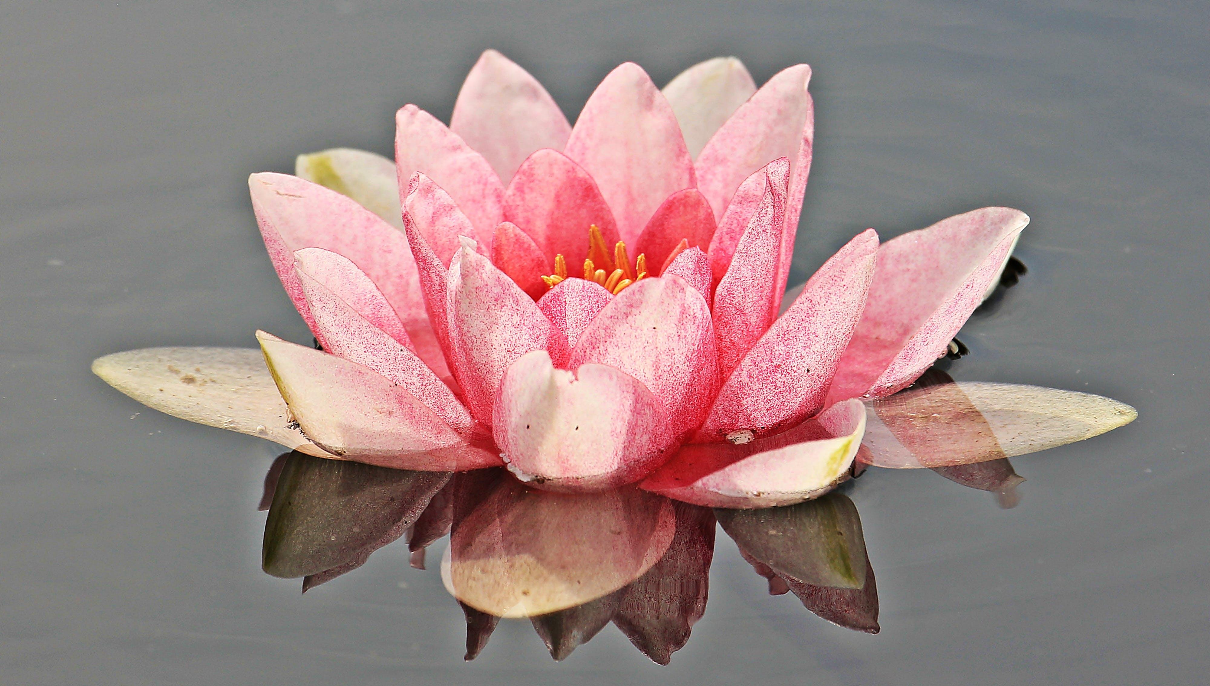 Pink Petal Floer