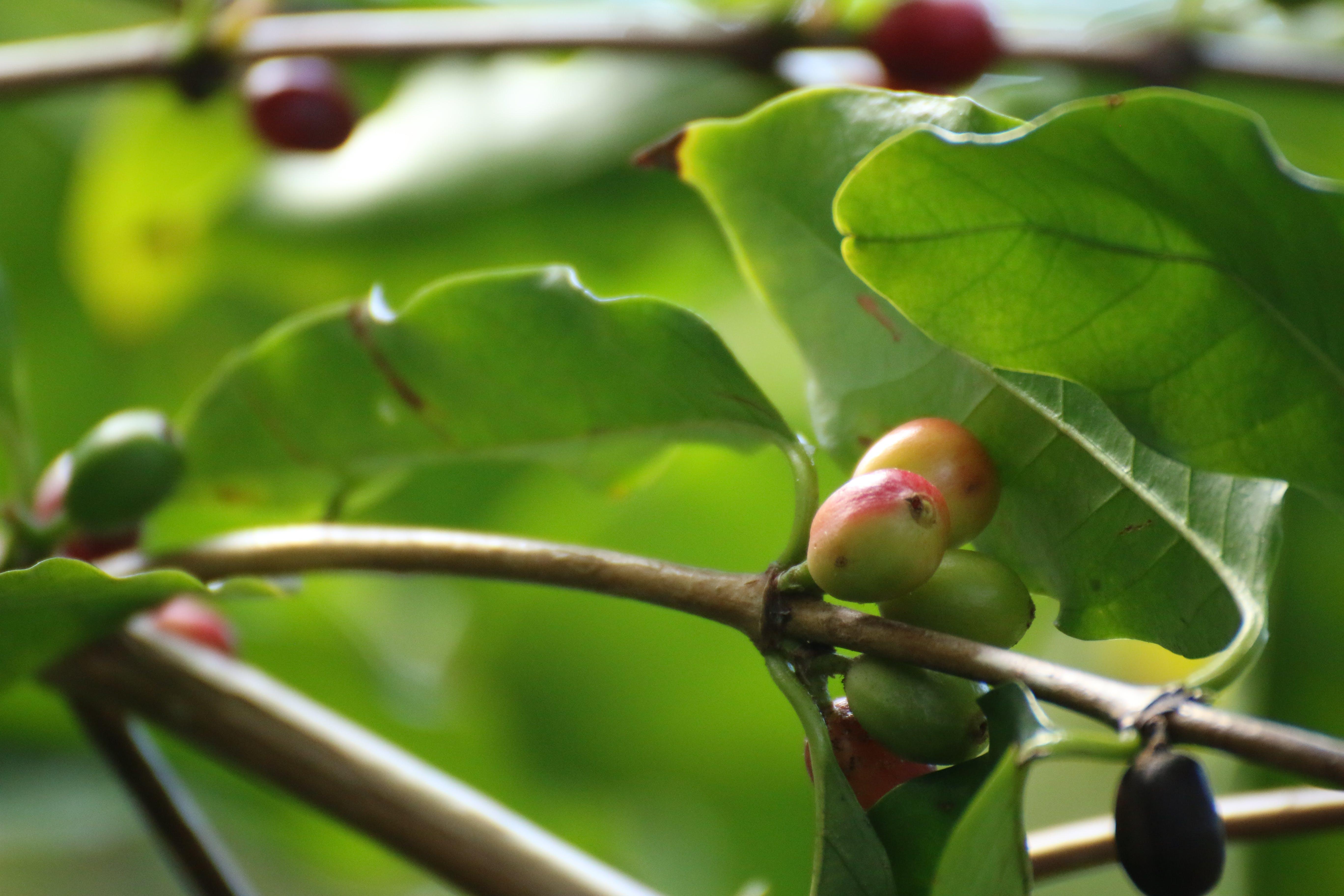 branches, closeup, coffee