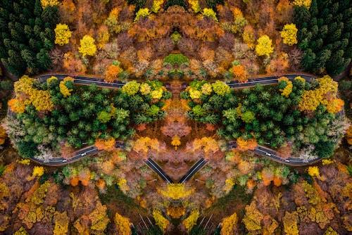 คลังภาพถ่ายฟรี ของ จากข้างบน, ต้นไม้, ถนน, ภาพถ่ายทางอากาศ
