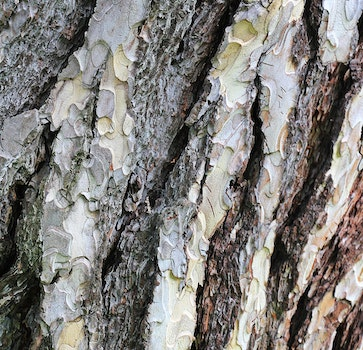 Free stock photo of wood, nature, forest, pattern