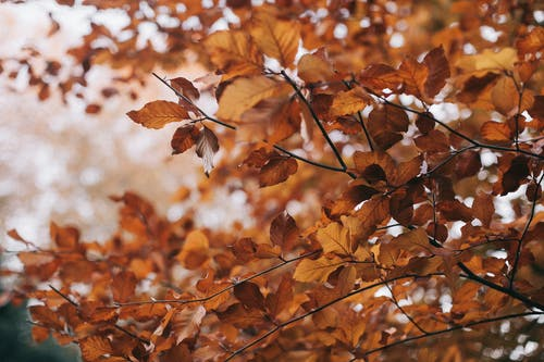 Brown Leaves Photo