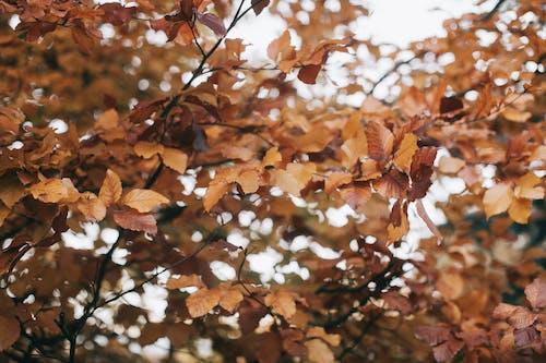 Gratis lagerfoto af gren, sæson