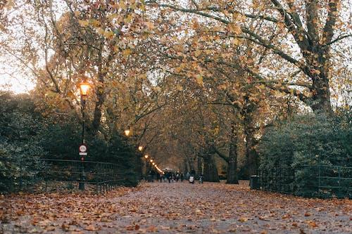 Foto profissional grátis de árvores, caminho asfaltado, cênico, cerca