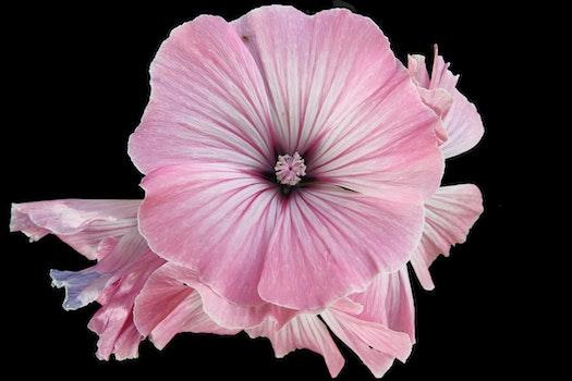 Pink Floral Flower