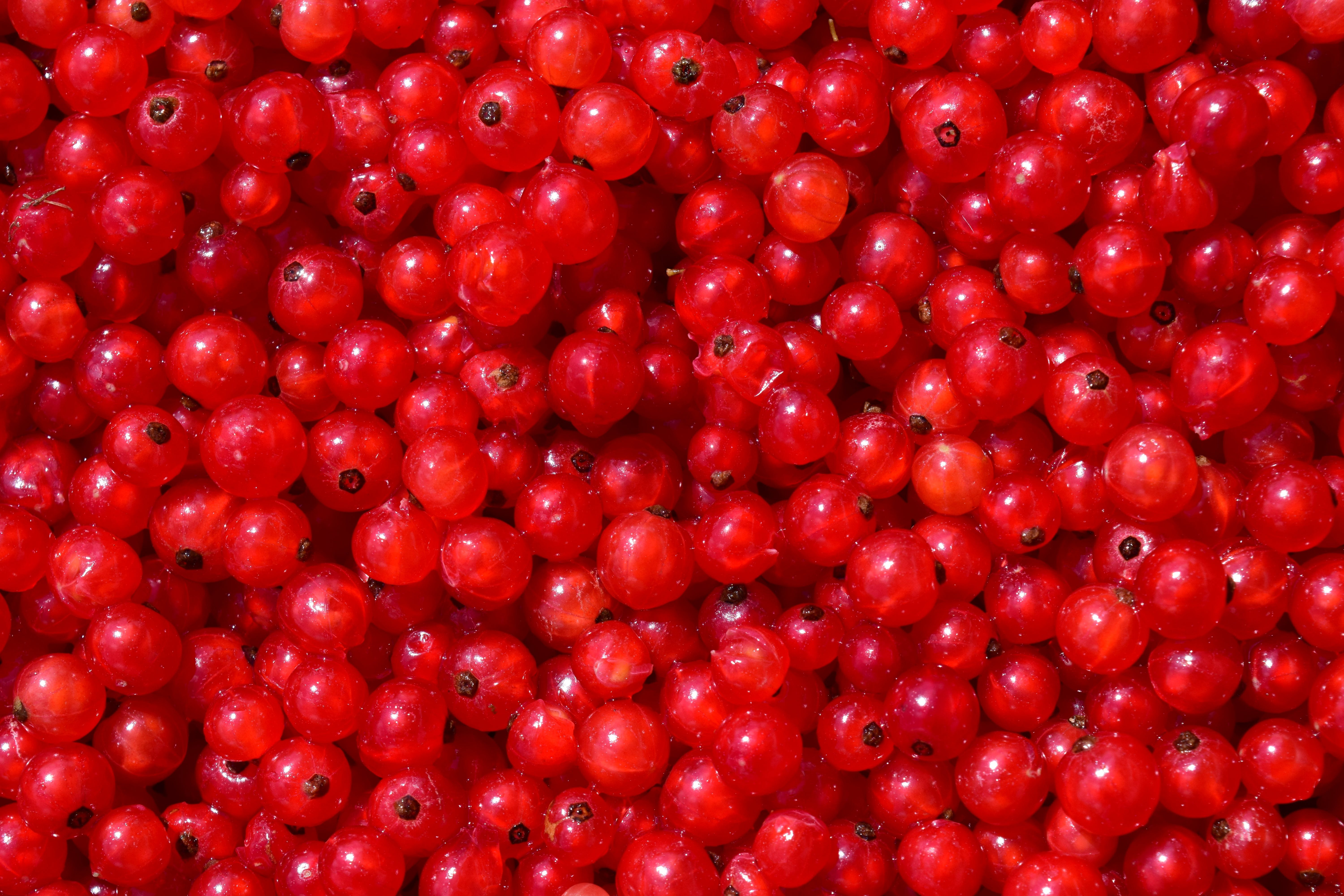 Free stock photo of food, red, garden, fruit
