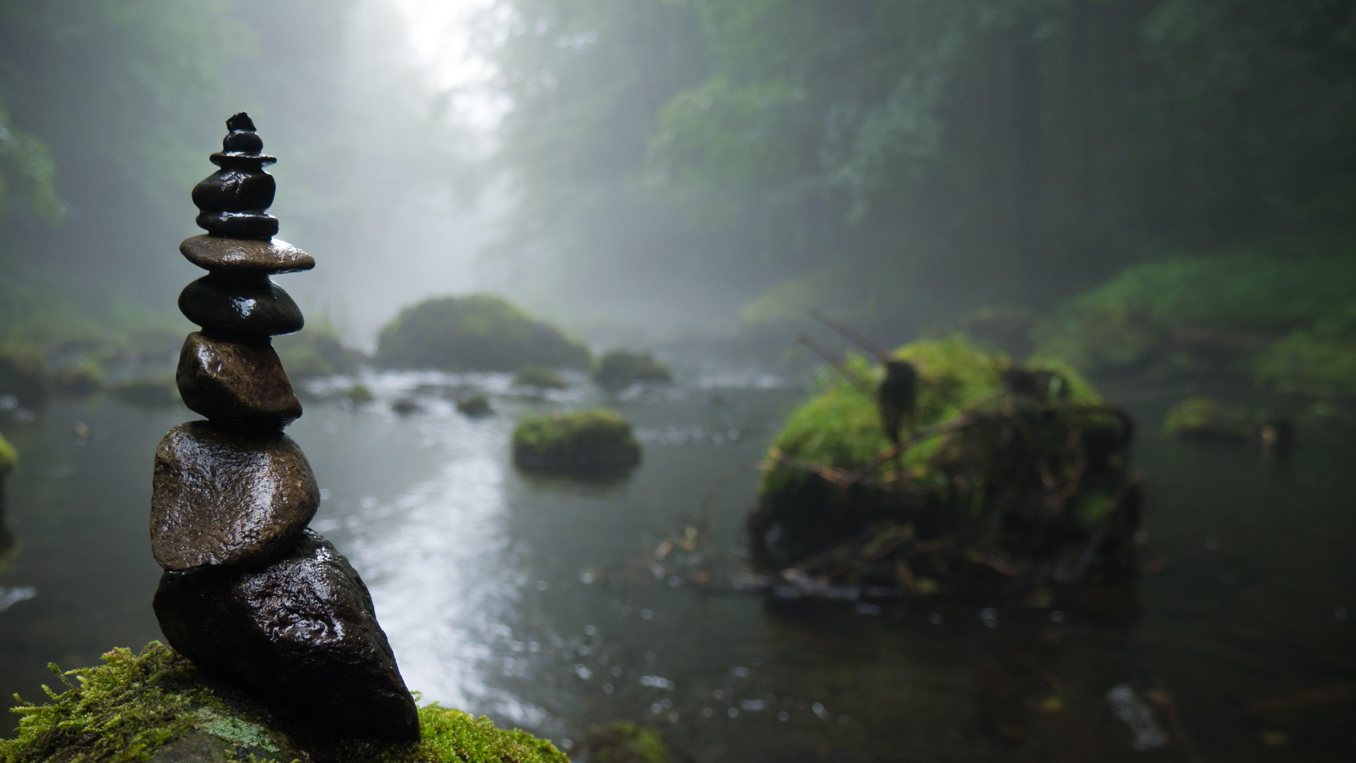 Fotos de stock gratuitas de agua, apilar piedras, arboles, bosque
