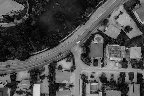 Fotos de stock gratuitas de arboles, arquitectura, blanco y negro, calle