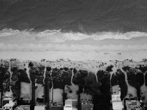 Darmowe zdjęcie z galerii z czarno-biały, domy, drzewa, fale