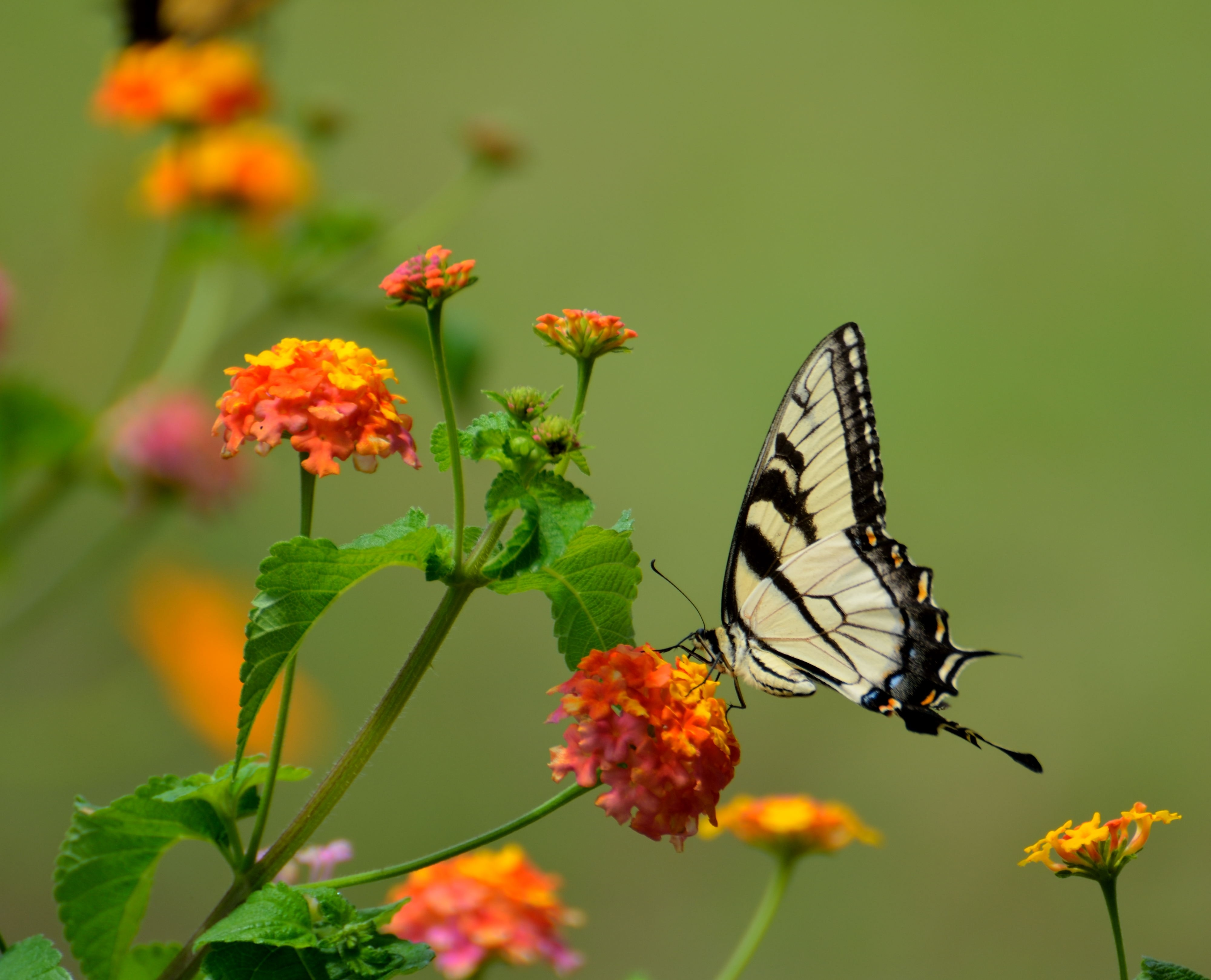 243 Beautiful Butterfly Pictures Pexels Free Stock Photos