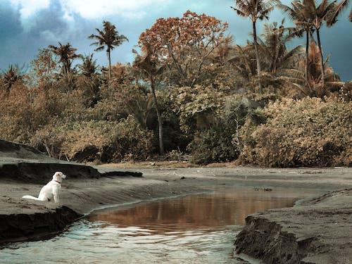 Gratis stockfoto met avontuur, Bali, groen, hond