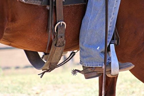 คลังภาพถ่ายฟรี ของ ขี่, ตะวันตก, ม้า, สีน้ำตาล