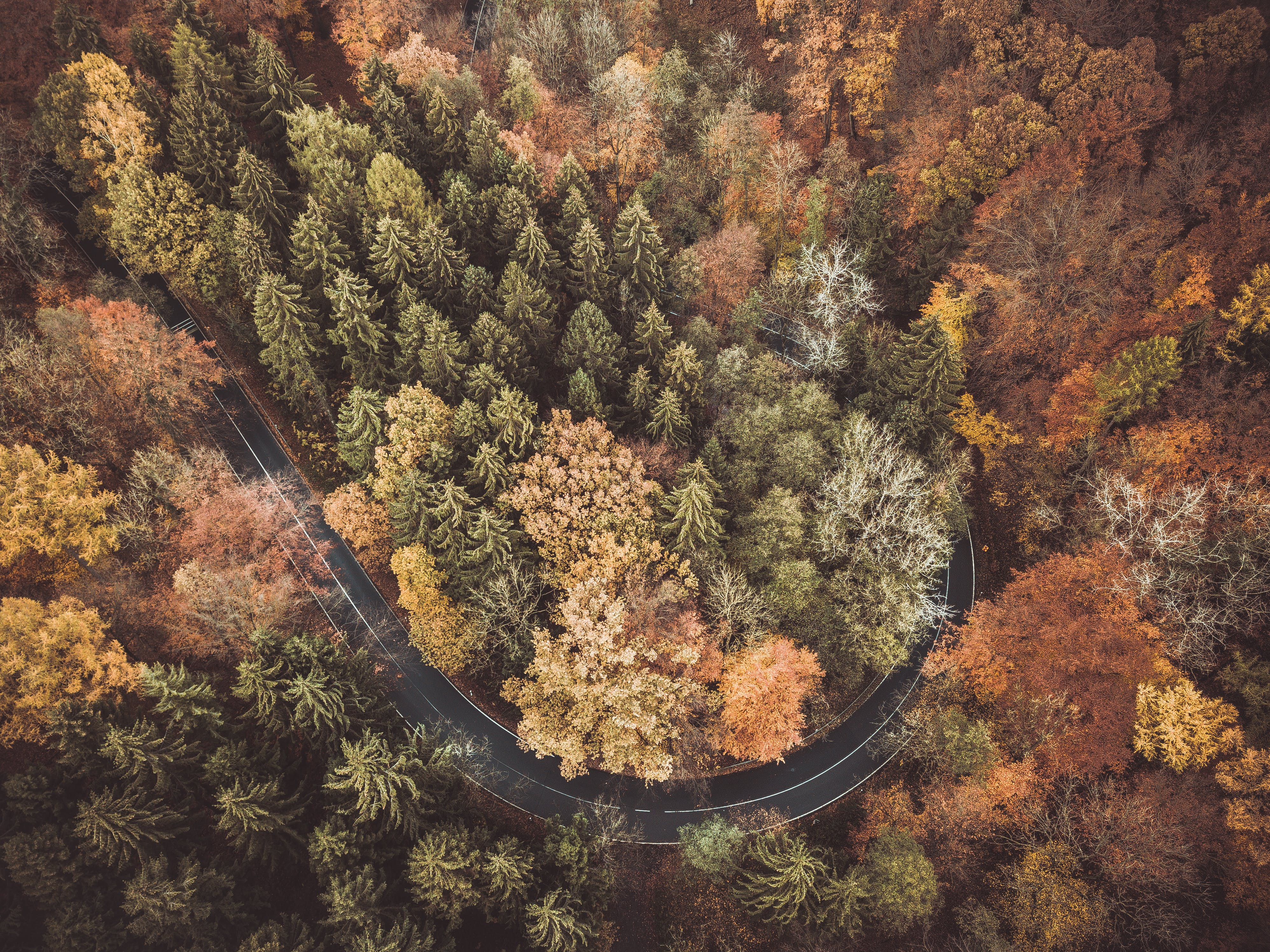Curved Road Covered by Trees