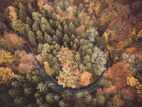 Foto d'estoc gratuïta de arbres, bosc, boscos, des de dalt