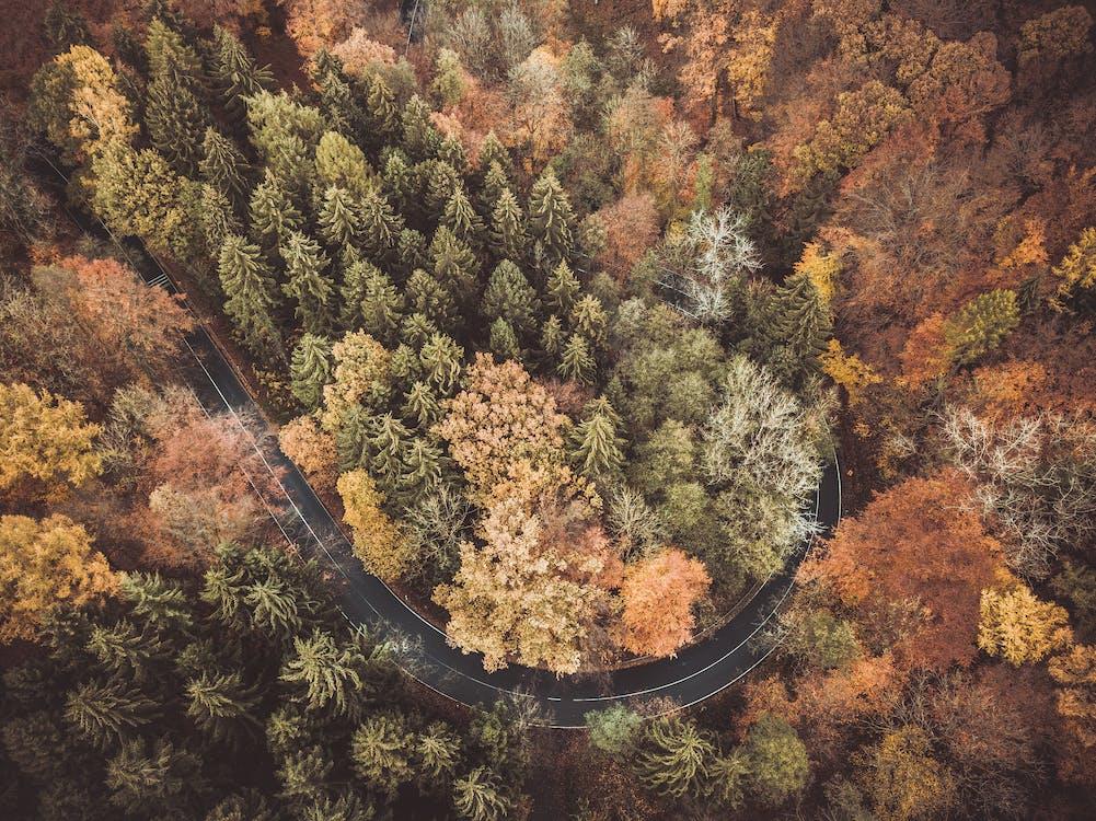 arbres, bosc, boscos
