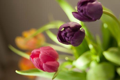 꽃, 보라색 꽃, 분홍색 꽃, 클로즈 업의 무료 스톡 사진