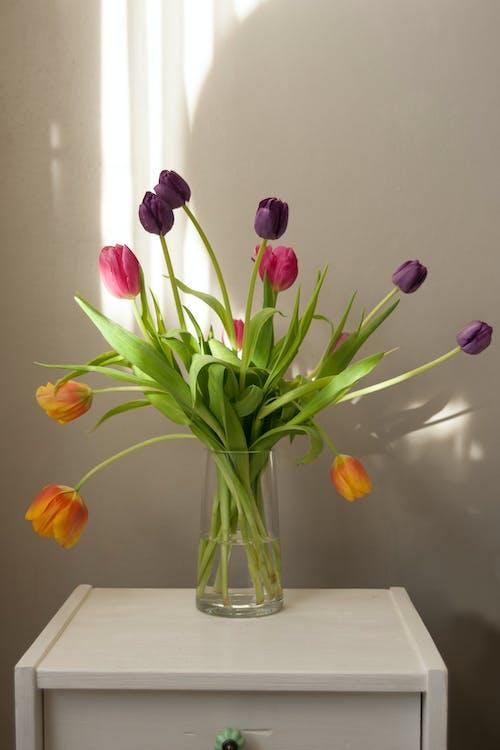꽃, 꽃병, 보라색 꽃, 분홍색 꽃의 무료 스톡 사진