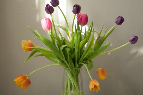 Foto Von Tulpen In Der Blumenvase