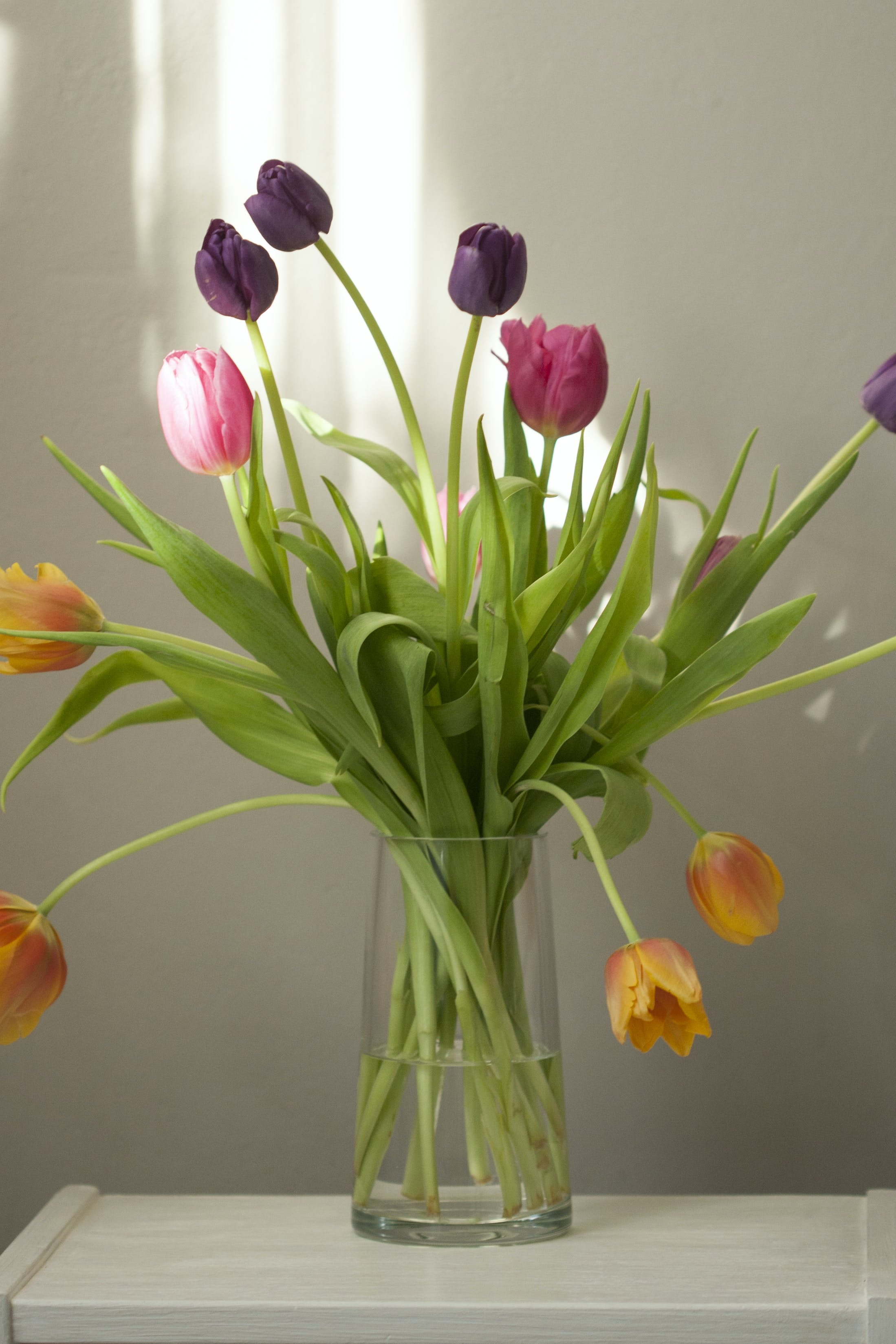 Free stock photo of arrangement, bloom, blossom, bouquet