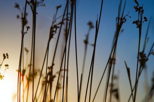 갈대, 잔디, 하늘의 무료 스톡 사진