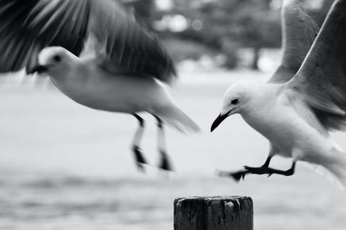 Immagine gratuita di ali, animali, bianco e nero, fauna selvatica