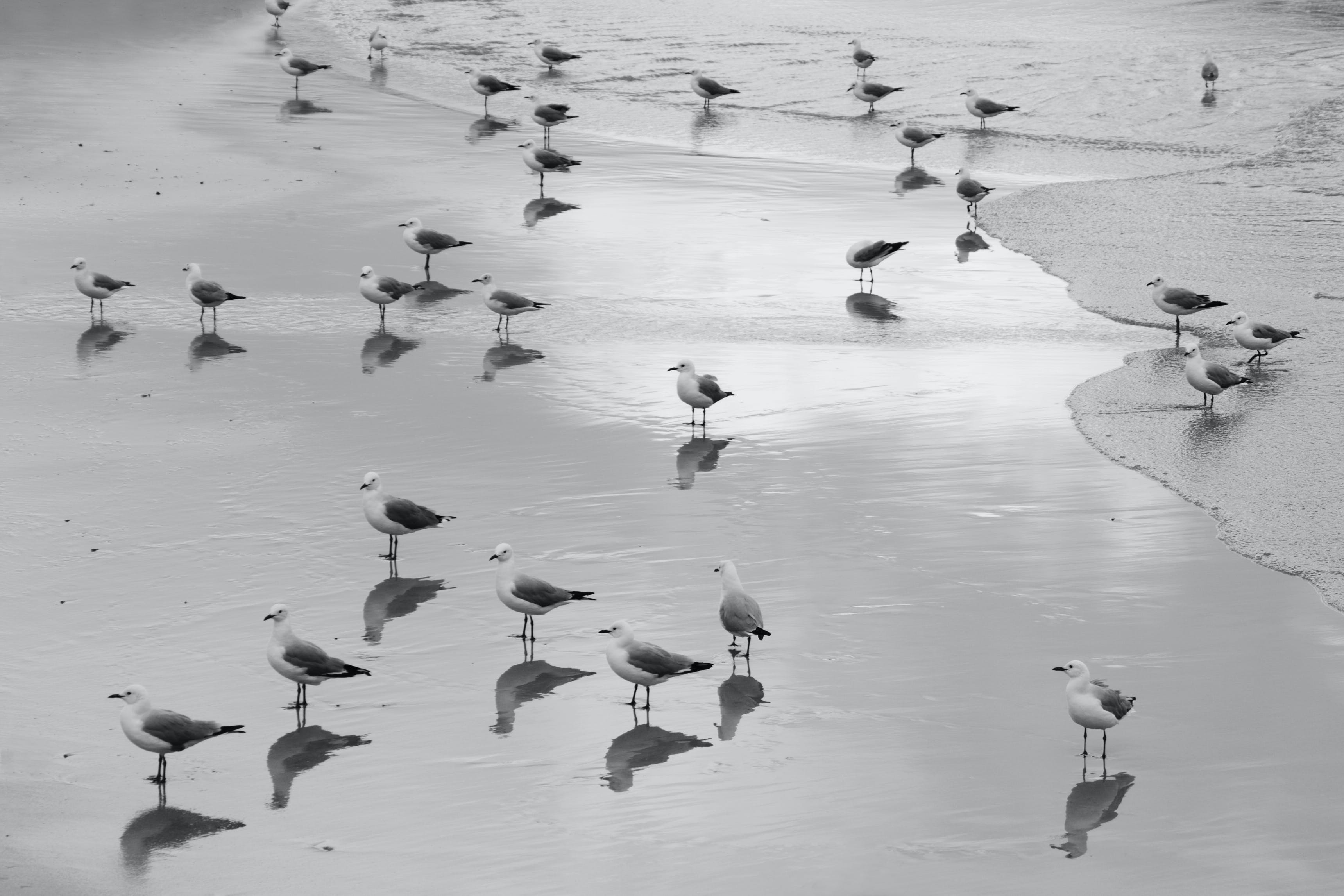 Grayscale Flock of Birds on Beach