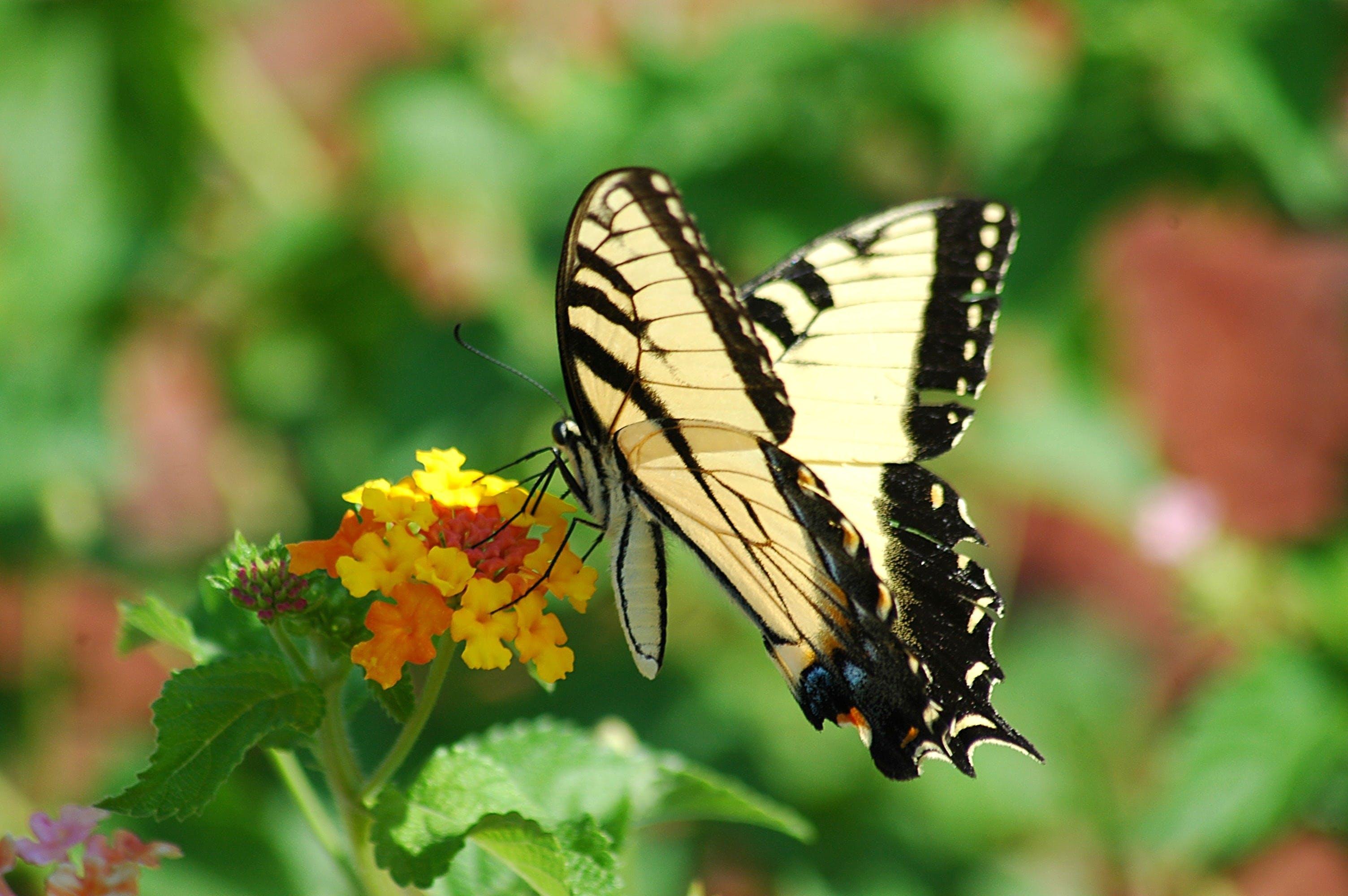 Free stock photo of nature, summer, pattern, garden