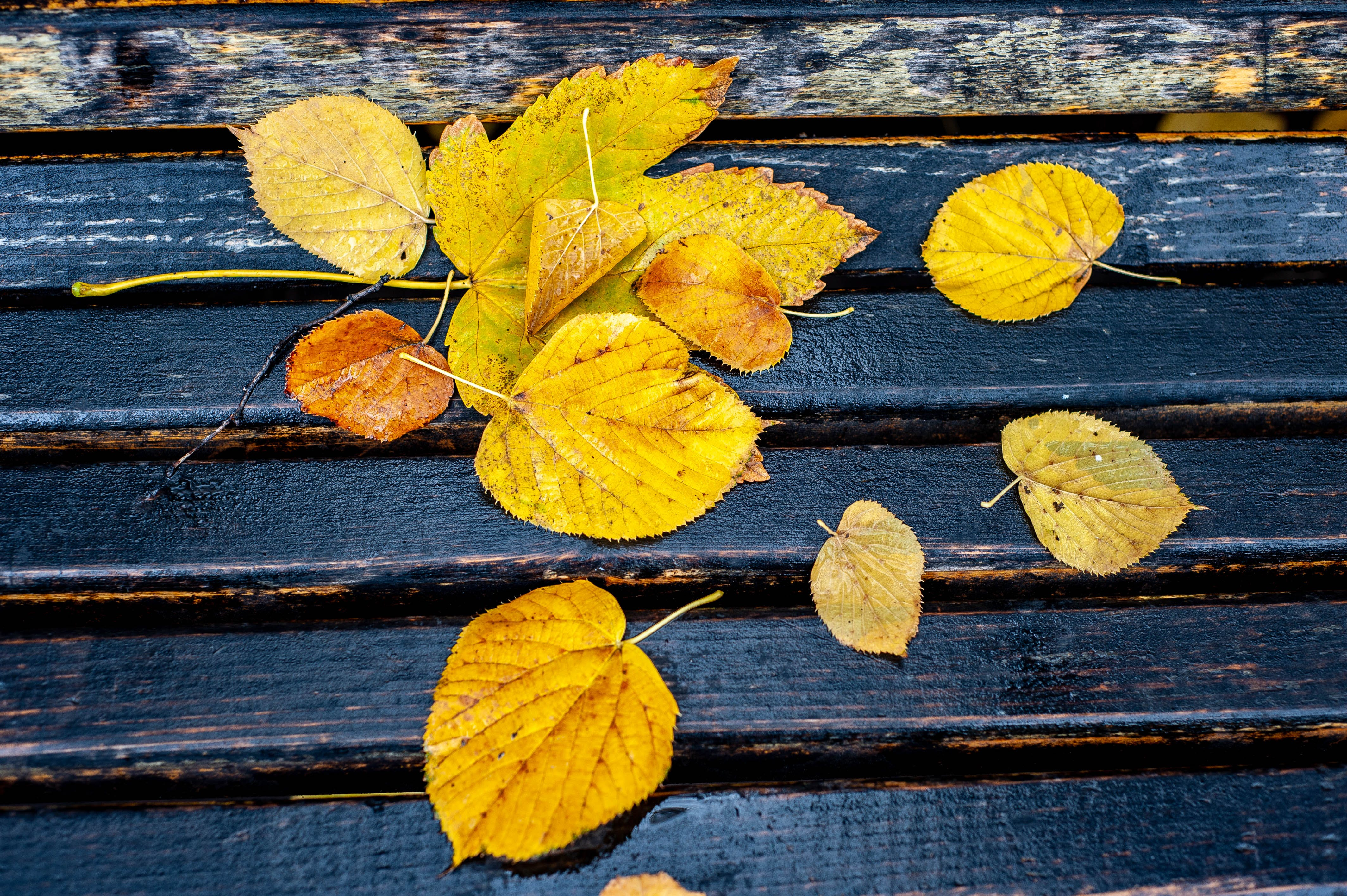 Free stock photo of autumn, autumn colours, autumn leaf, autumn leaves