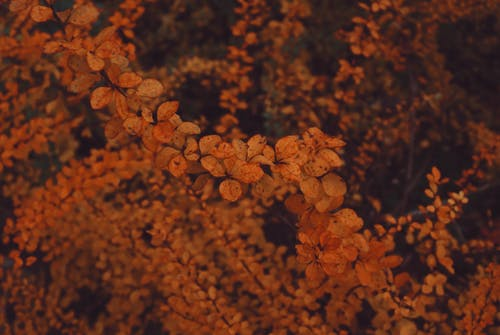 Free stock photo of fall colors, fall leaves, orange, orange background