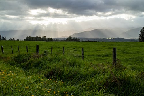 Free stock photo of field, grass field, mountain