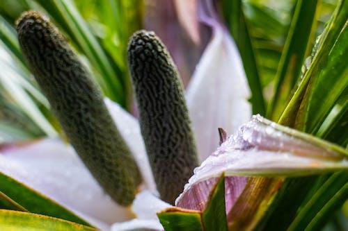 Free stock photo of beautiful flowers, defocused, flower