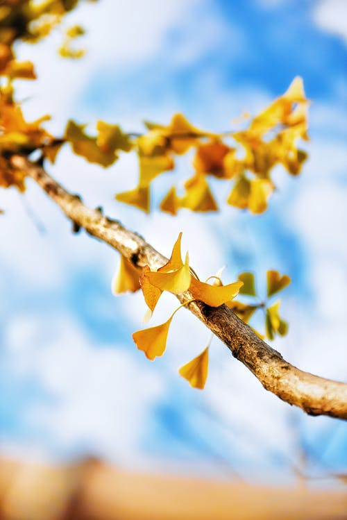 Yellow Leaves on Focus Photo