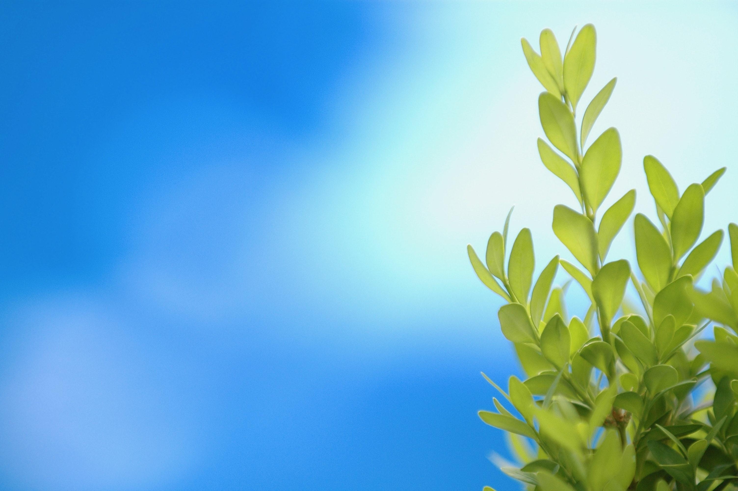 Free Stock Photo Of Blue Background Garden Green